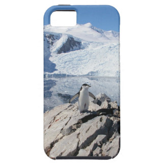 Chinstrap Penguins in Antarctica iPhone 5 Covers
