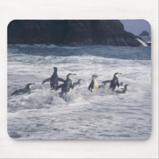 Chinstrap Penguins in the beach surf Mouse Pad