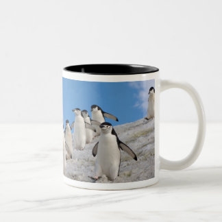 chinstrap penguins, Pygoscelis antarctica, Two-Tone Coffee Mug