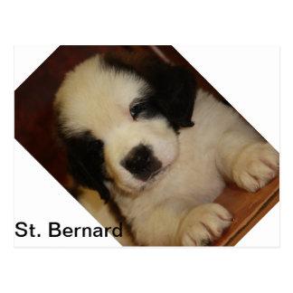 Chiot doux de St Bernard Carte Postale