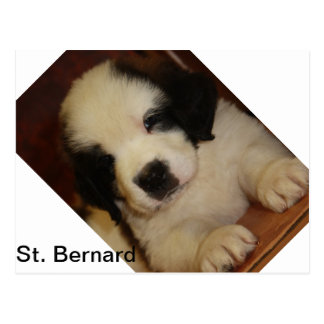 Chiot doux de St Bernard Cartes Postales