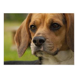 Chiot mignon de beagle carton d'invitation  13,97 cm x 19,05 cm