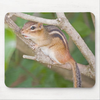 Chipmonk Mouse Pad