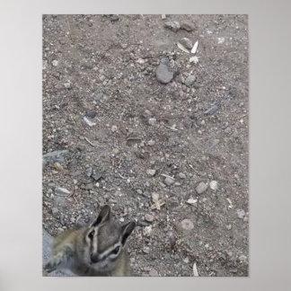 Chipmunk camera curiosity poster