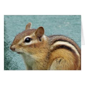 Chipmunk Close Up Card