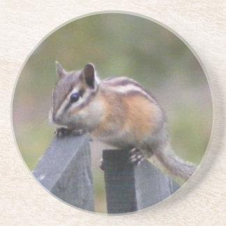 Chipmunk Coaster