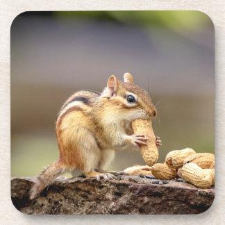 Chipmunk eating a peanut coaster