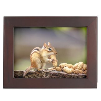 Chipmunk eating a peanut keepsake box