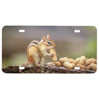 Chipmunk eating a peanut license plate