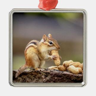 Chipmunk eating a peanut metal ornament