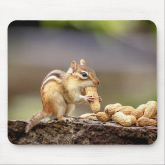 Chipmunk eating a peanut mouse pad