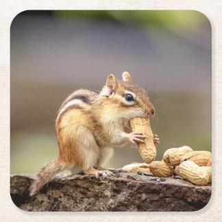 Chipmunk eating a peanut square paper coaster