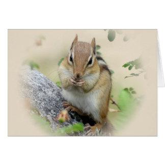 Chipmunk Eating Card