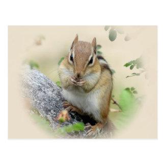 Chipmunk Eating Postcard