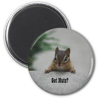 Chipmunk 'Got Nuts?' magnet