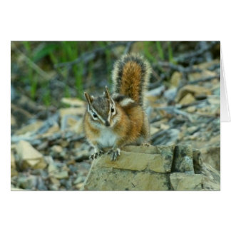 Chipmunk in Glacier National Park I Card