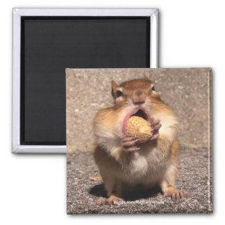 Chipmunk - Magnet