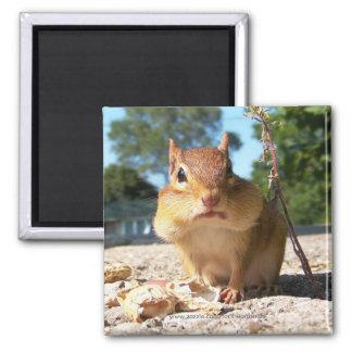 Chipmunk -Magnet Magnet