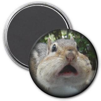 Chipmunk OMG Button. Magnet