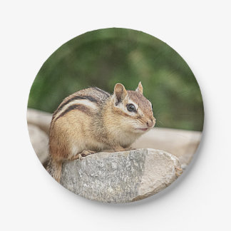 Chipmunk on a rock paper plate
