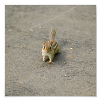 Chipmunk Photo Print