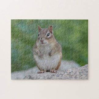 Chipmunk sitting upright puzzle