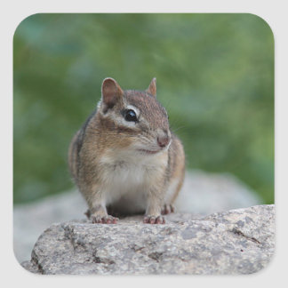 Chipmunk Square Sticker