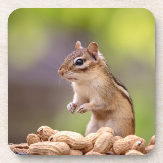 Chipmunk with peanuts coaster