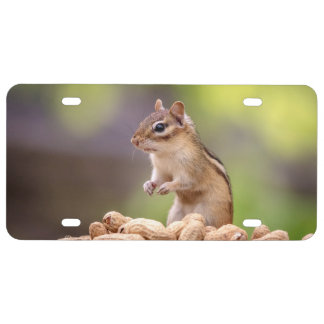 Chipmunk with peanuts license plate
