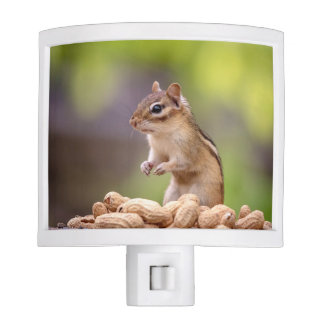 Chipmunk with peanuts nite light
