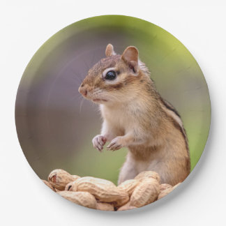 Chipmunk with peanuts paper plate