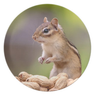 Chipmunk with peanuts plate
