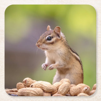 Chipmunk with peanuts square paper coaster