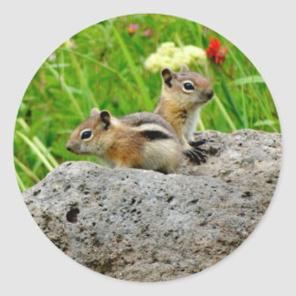 Chipmunks and wildflowers classic round sticker