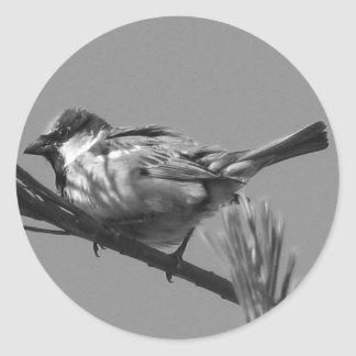 Chipping Sparrow Round Sticker