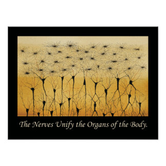 Chiropractic Quotes Nervous System Poster