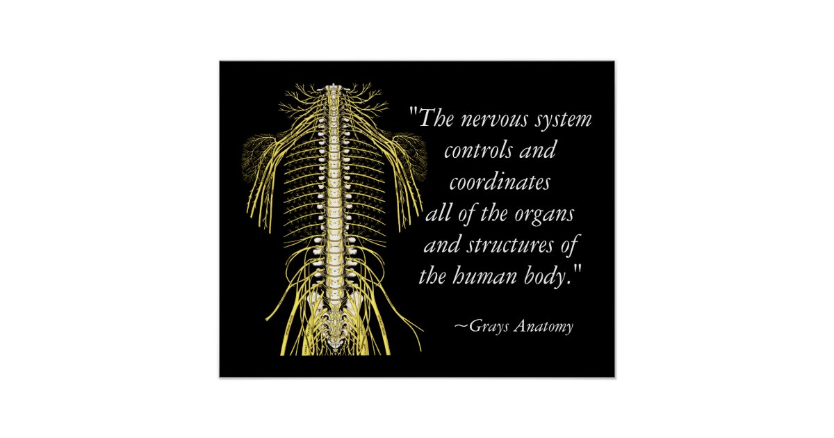 Chiropractic Sayings Quotes Nerves Poster Zazzle