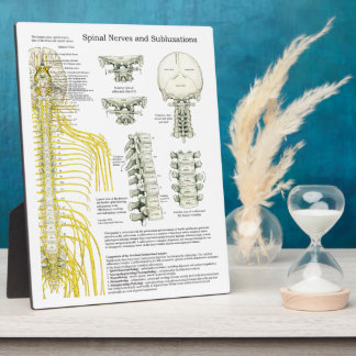 Chiropractic Spinal Nerves Subluxations Easel Plaque