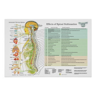Chiropractic Subluxation Spinal Nerves ANS Chart Poster