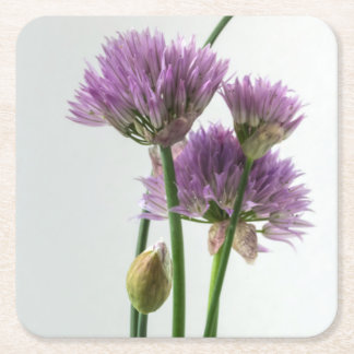 chives in bloom square paper coaster