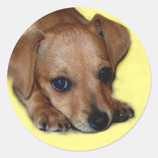 Chiweenie Sticker