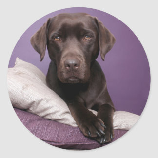 Chocolate Brown Labrador Retriever Dog Sticker