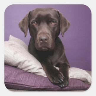 Chocolate Brown Labrador Retriever Dog Sticker