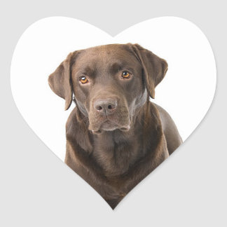 Chocolate Brown Labrador Retriever Puppy Dog Heart Heart Sticker