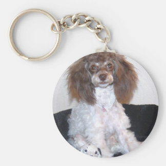 Chocolate Brown Phantom Parti Poodle Pup Basic Round Button Keychain
