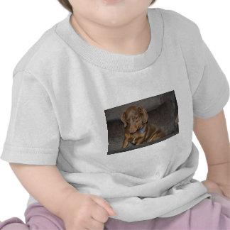 Chocolate Dachshund T-shirts