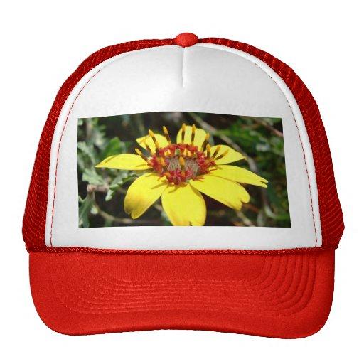 Chocolate flower Berlandiera lyrata yellow Trucker Hat