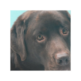 Chocolate Lab Dog Canvas Print