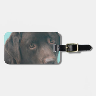 Chocolate Lab Dog Luggage Tag