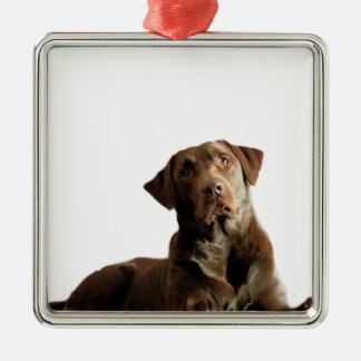 Chocolate Lab Laying Lounging on the word DOG Silver-Colored Square Ornament